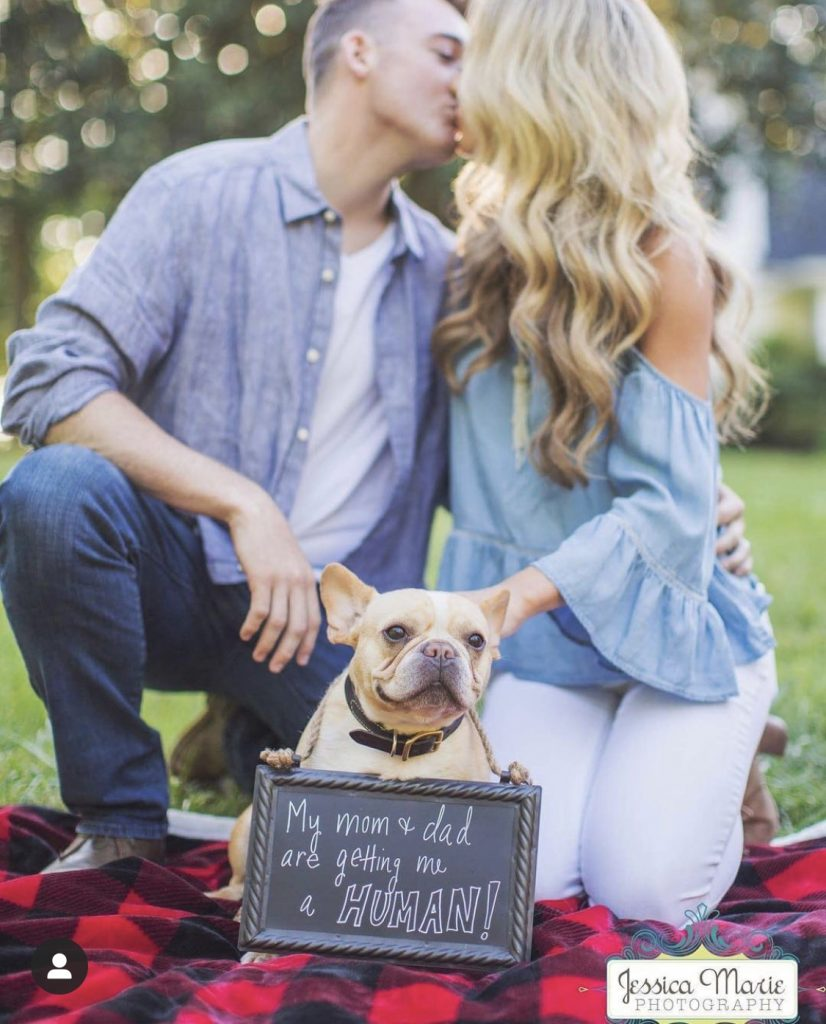 Looking for the perfect way to create a dog baby announcement to reveal that you're pregnant to family, friends, or social media? Here they are